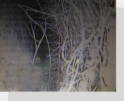 Inspection des drains français par caméra et lavage des drains